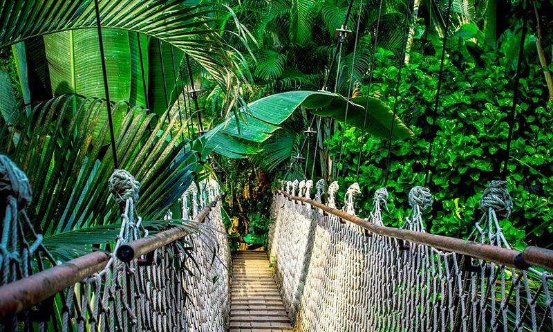 Amazonas, el pulmón de la Tierra