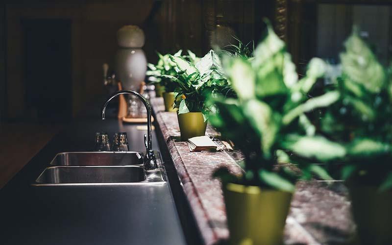 Plantas naturales de interior